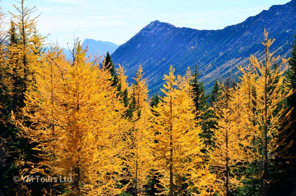 シーズンを通して楽しめる3つのベスト・ハイキングコース_d0112928_03564885.jpg