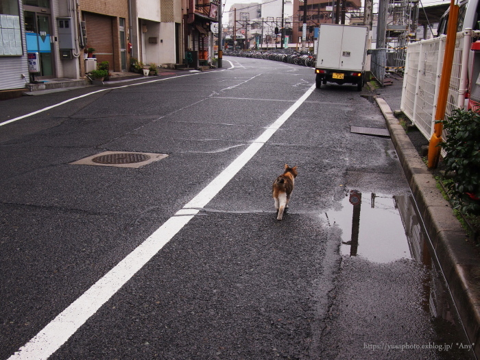雨あがれ_e0347431_23322477.jpg