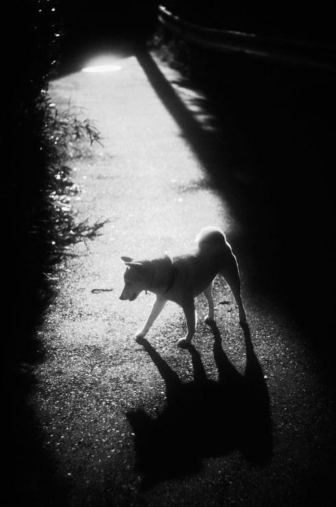 Shadow&Light(3cut)_e0342136_18442389.jpg