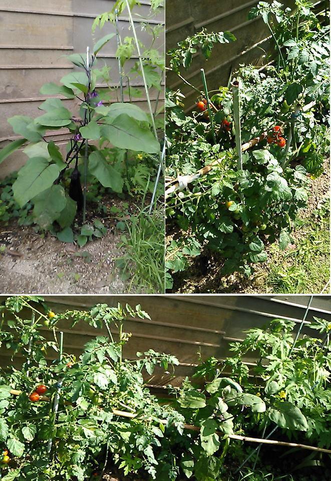 野菜 収穫出来ました!_b0096638_17253891.jpg
