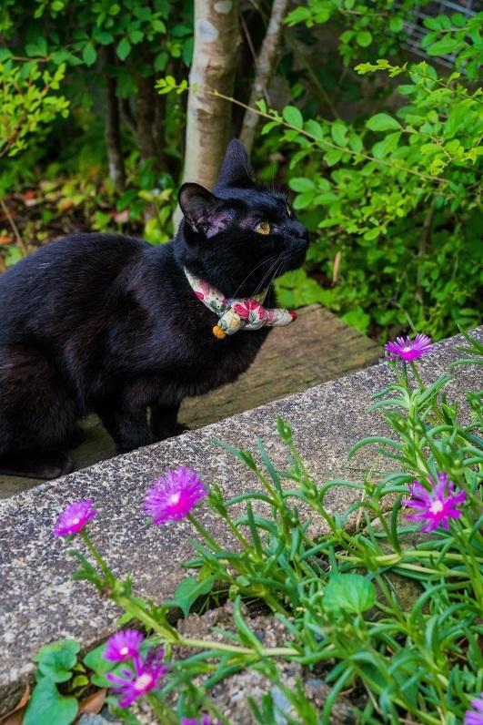 看板猫のいるギャラリー~くらしのギャラリーちぐさ_e0363038_09164599.jpg
