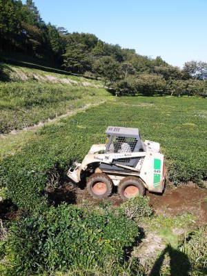 無農薬栽培の白エゴマ油『ピュアホワイト』令和2年度の白エゴマの定植は雨との戦いです!_a0254656_17303171.jpg