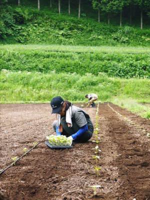 無農薬栽培の白エゴマ油『ピュアホワイト』令和2年度の白エゴマの定植は雨との戦いです!_a0254656_17531896.jpg