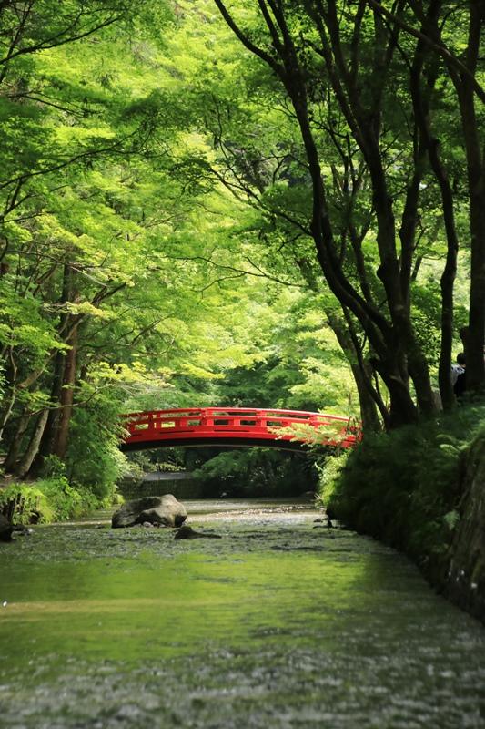 小国神社の夏・1♪ ~宮川沿い~_a0167759_1743115.jpg