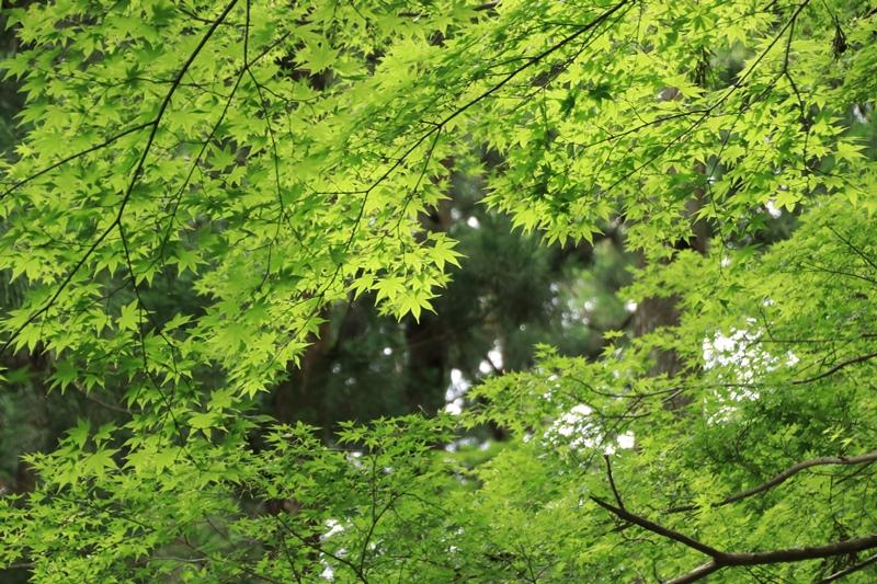 小国神社の夏・1♪ ~宮川沿い~_a0167759_17441523.jpg