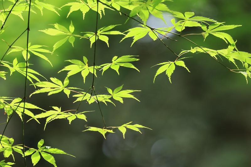 小国神社の夏・1♪ ~宮川沿い~_a0167759_17473594.jpg