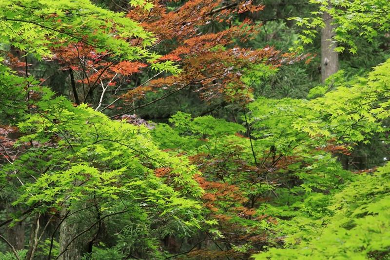 小国神社の夏・1♪ ~宮川沿い~_a0167759_17475365.jpg