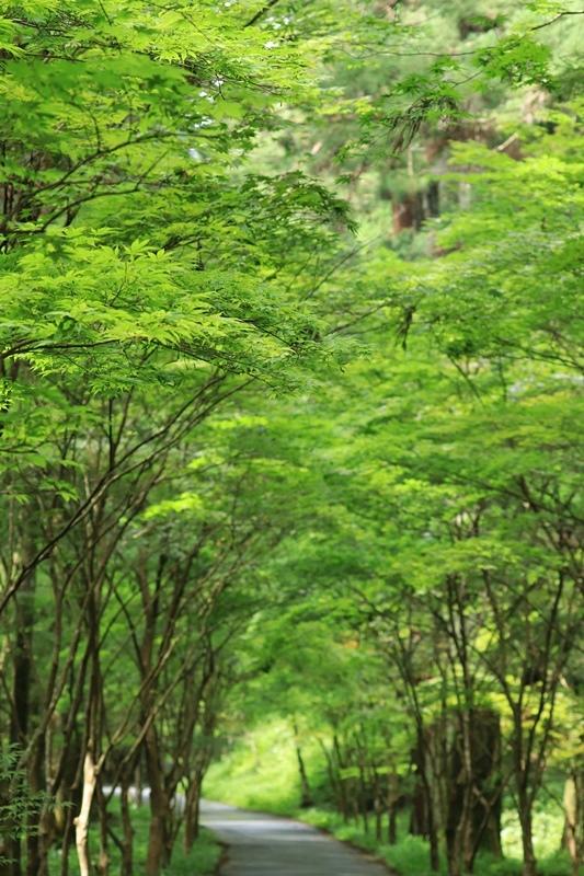 小国神社の夏・1♪ ~宮川沿い~_a0167759_1749346.jpg
