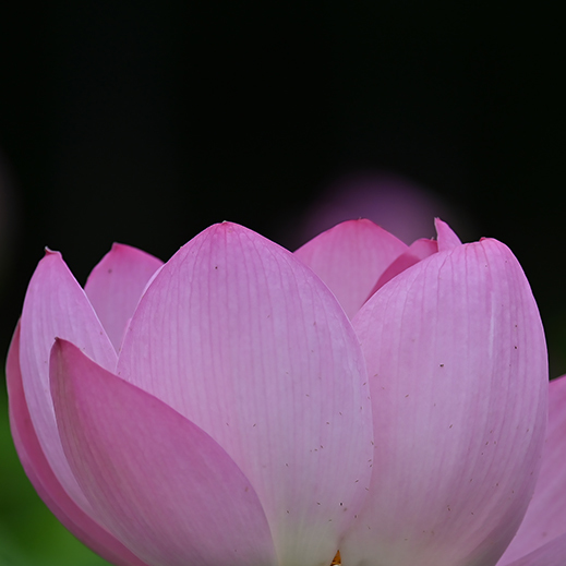 夏の花 01_f0099102_15385525.jpg