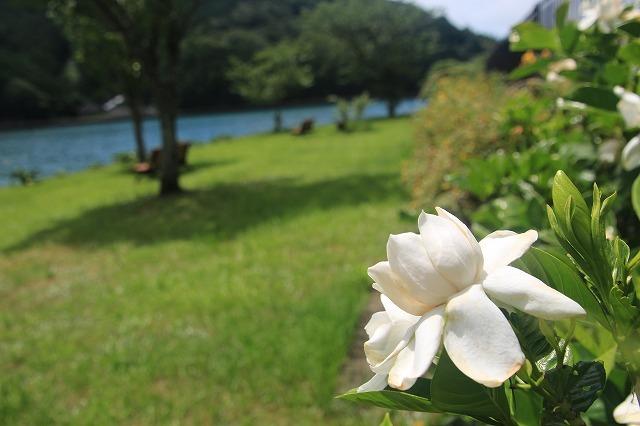 ネジバナ開花(撮影:6月25日)_e0321325_18492363.jpg