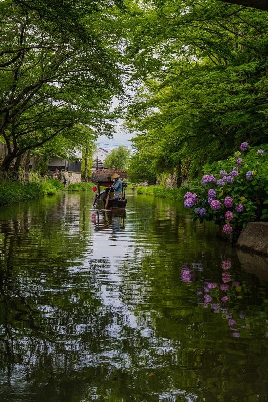 八幡堀に咲く紫陽花_e0363038_17330631.jpg