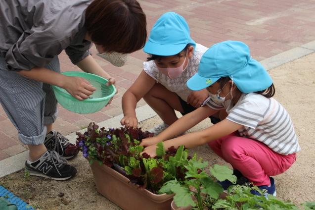 6月の千鳥幼稚園のこどもたち(その2)_e0209845_16595376.jpg
