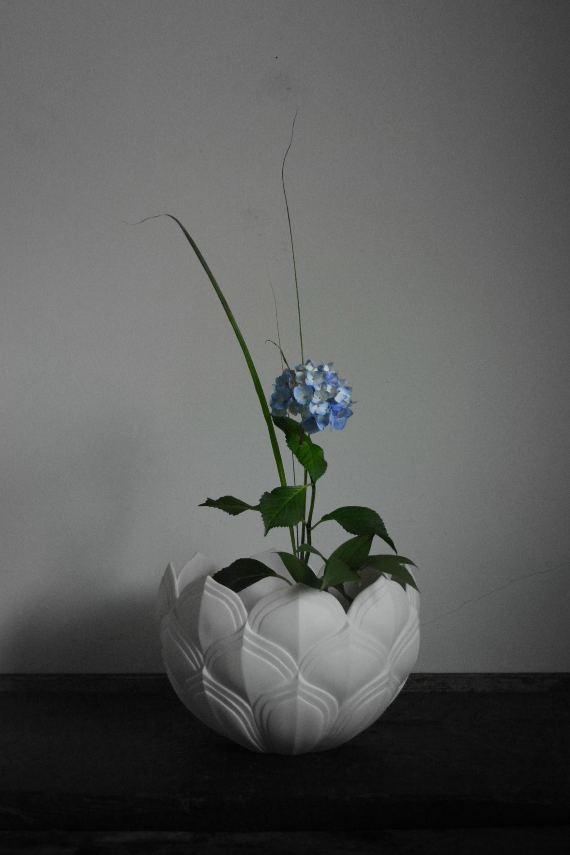 「若杉聖子展 PORCELIAN LOTUS」7日目_d0087761_0123770.jpg