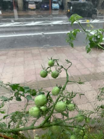 今日も大雨!_a0077071_17202260.jpg