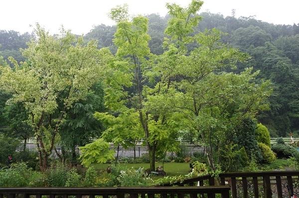樹木はとっても元気_e0365880_12461963.jpg