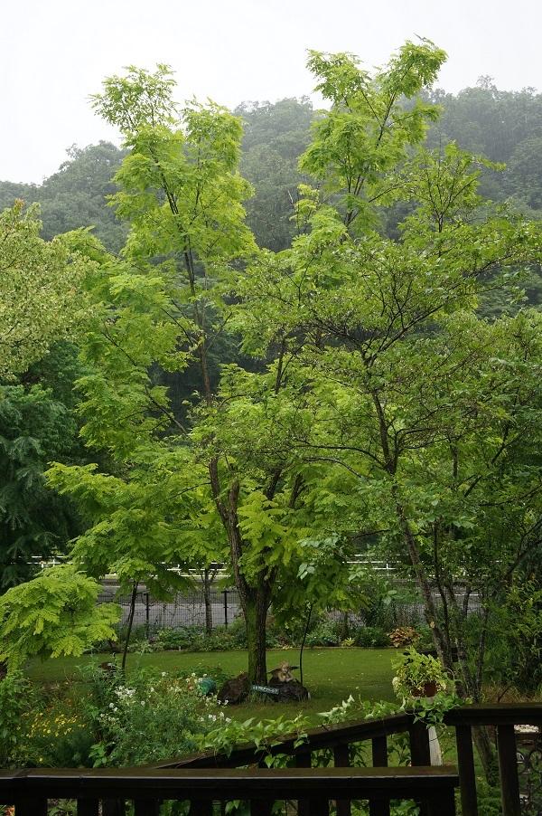 樹木はとっても元気_e0365880_12463433.jpg