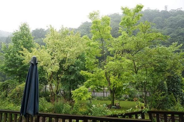樹木はとっても元気_e0365880_12465076.jpg