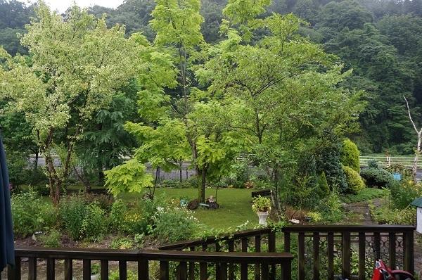 樹木はとっても元気_e0365880_12473178.jpg