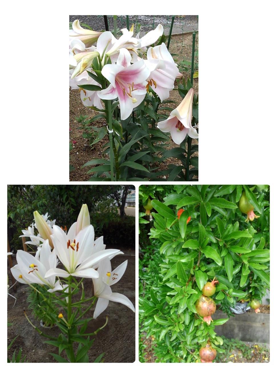 梅雨空を吹き飛ばす⁉ゴージャスな花々!_e0281793_16292366.jpeg