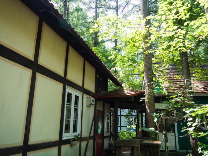 """ど根性""""オニグルミ""""・・屋根の上で成長しています。_f0276498_10191573.jpg"""