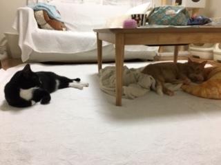 あいつ今何してる?(卒業犬猫たち)_f0242002_15270264.jpeg