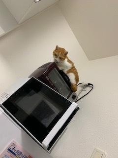 あいつ今何してる?(卒業犬猫たち)_f0242002_15271751.jpeg