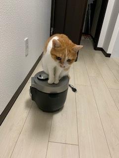 あいつ今何してる?(卒業犬猫たち)_f0242002_15272699.jpeg
