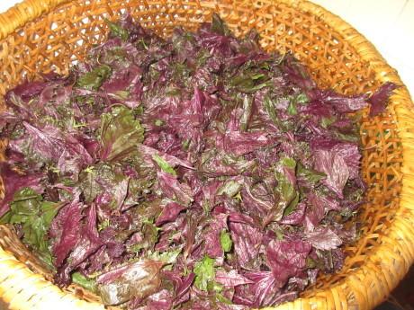 梅と紫蘇・ねこちゃんのライバル_a0203003_20551201.jpg