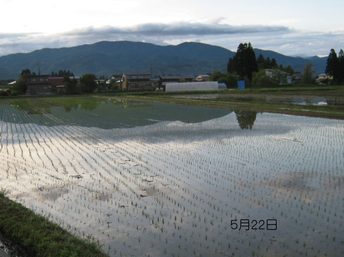 今日は雨ふり・・結構な降りかたです_a0023916_09250679.jpg