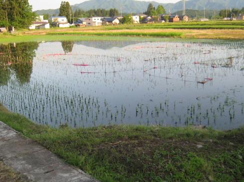 今日は雨ふり・・結構な降りかたです_a0023916_09341905.jpg