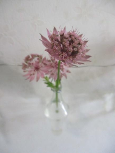 お花を飾って3人でランチ会_a0279743_22023407.jpg