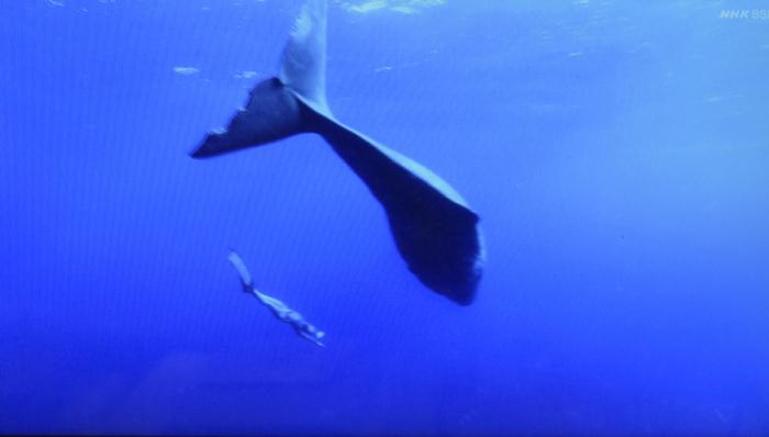 クジラと泳ぐ女性_f0103459_09281979.jpg