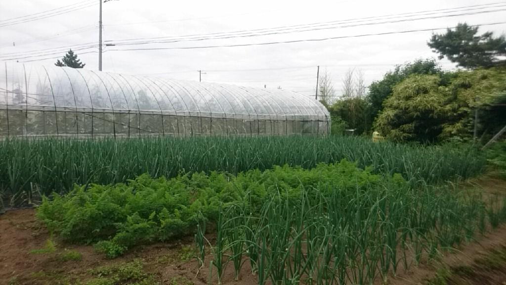 農業_b0106766_19342669.jpg