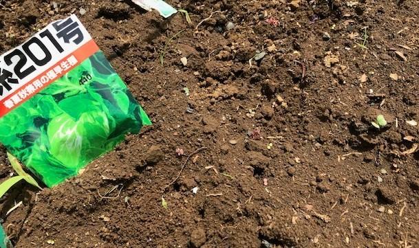 六国見山のブルーベリーに専用肥料を追肥7・11_c0014967_21404185.jpg