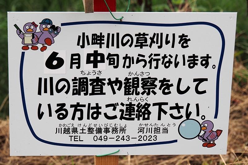 小畔川便り(ジャコウアゲハ吸蜜:2020/6/29・7/1)_f0031682_10130709.jpg