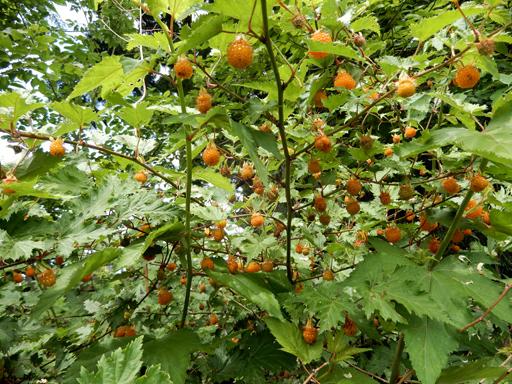 木の実とジャム作り_d0366590_19074225.jpg