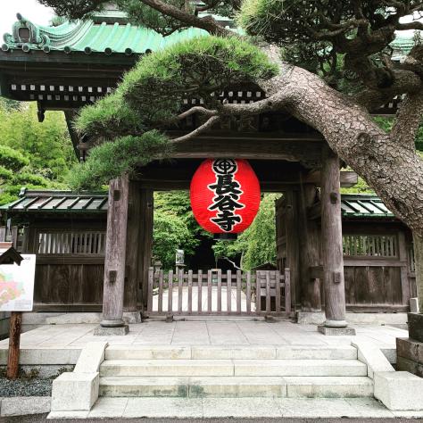 長谷寺の紫陽花。_a0112393_10505794.jpg