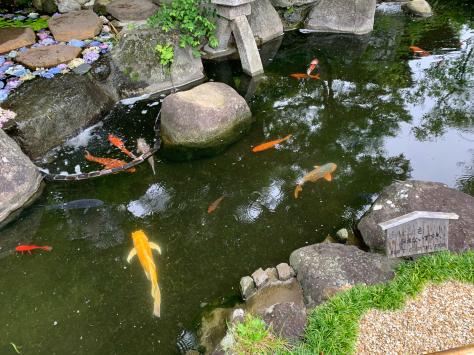 長谷寺の紫陽花。_a0112393_10510319.jpg