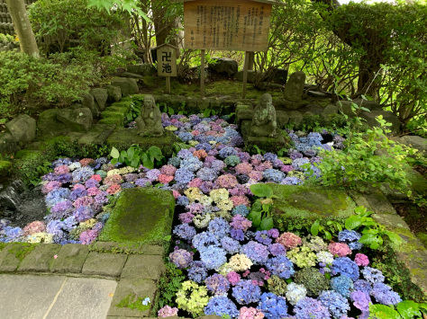 長谷寺の紫陽花。_a0112393_10511628.jpg