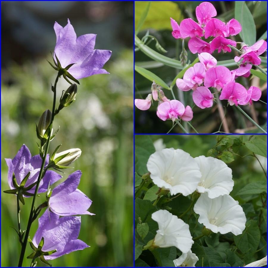 花いろいろ_d0162994_08350319.jpg