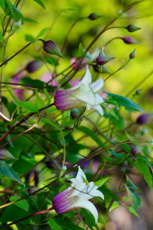 花いろいろ_d0162994_08392247.jpg
