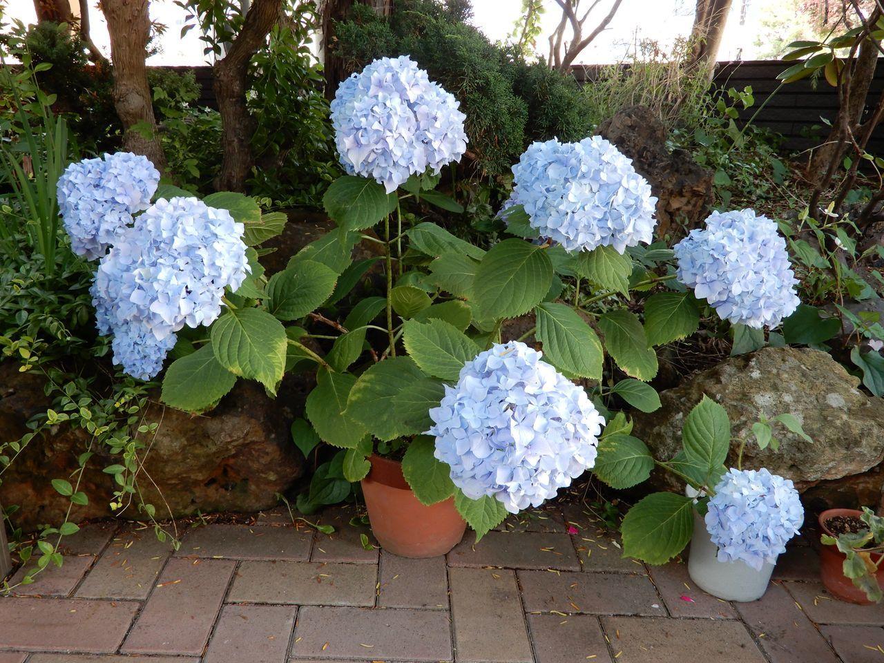 夏も花の季節_c0025115_21290910.jpg
