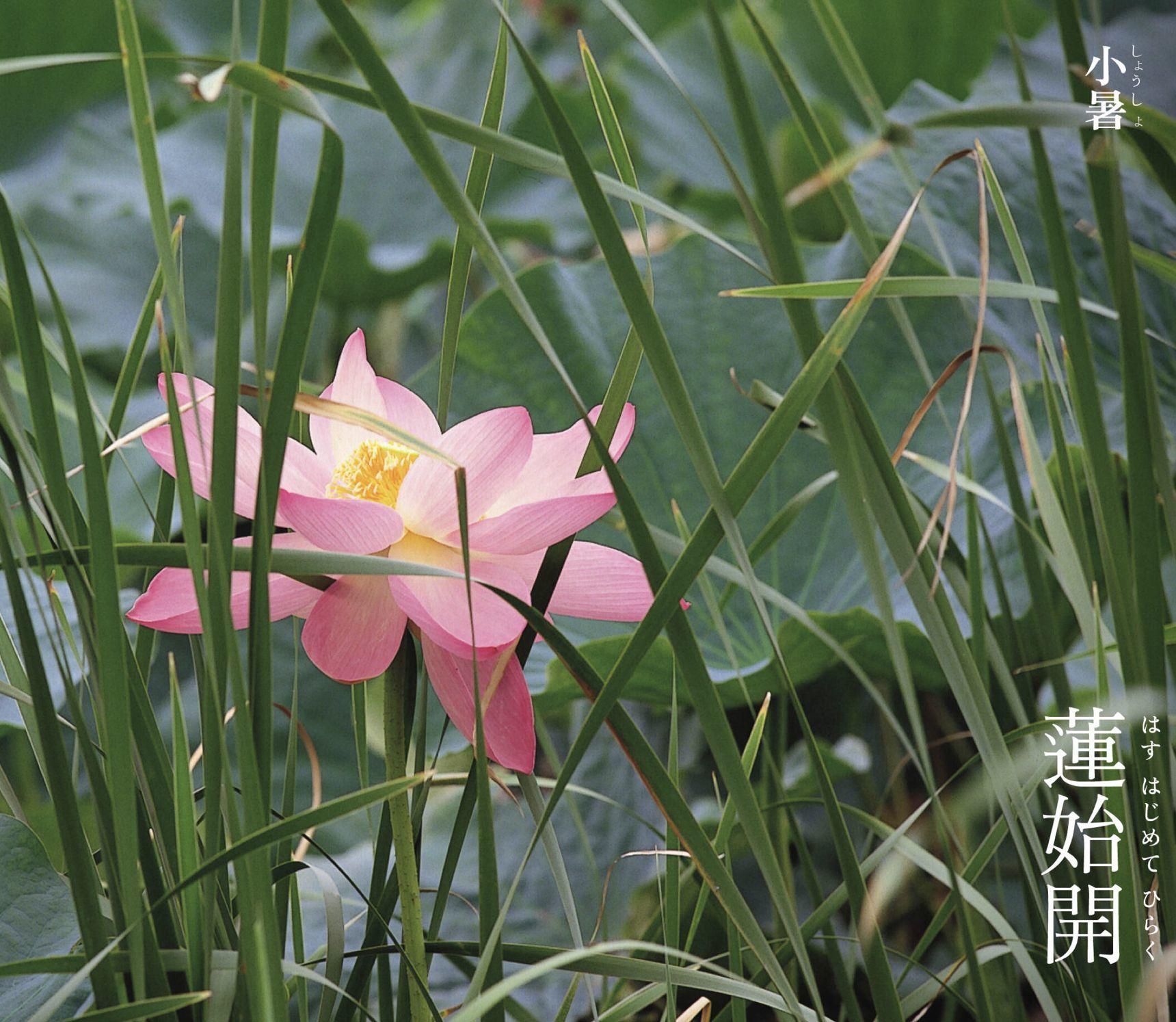 夏も花の季節_c0025115_21355072.jpg