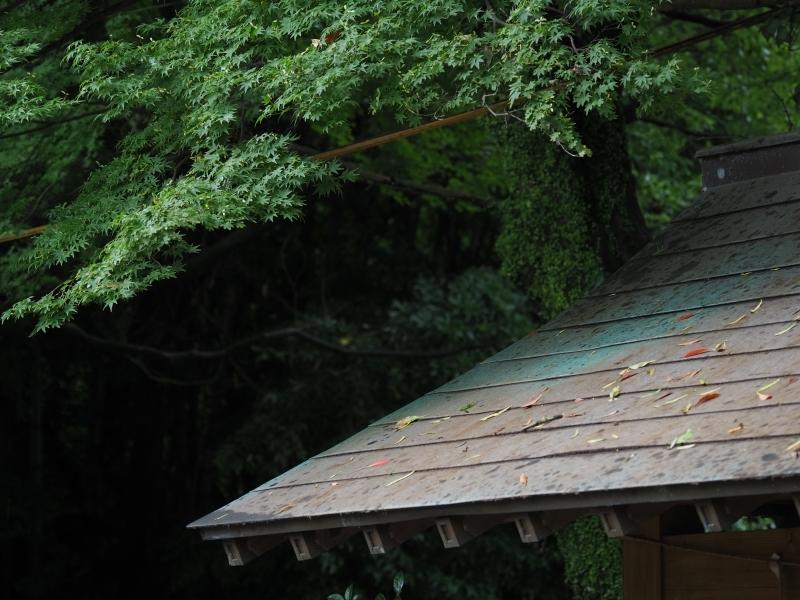 梅雨の風景 (1/2)_d0052327_11512112.jpg