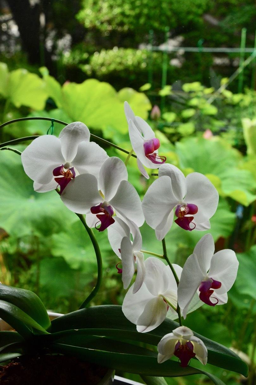 我が家の花たち_e0099737_21594878.jpg