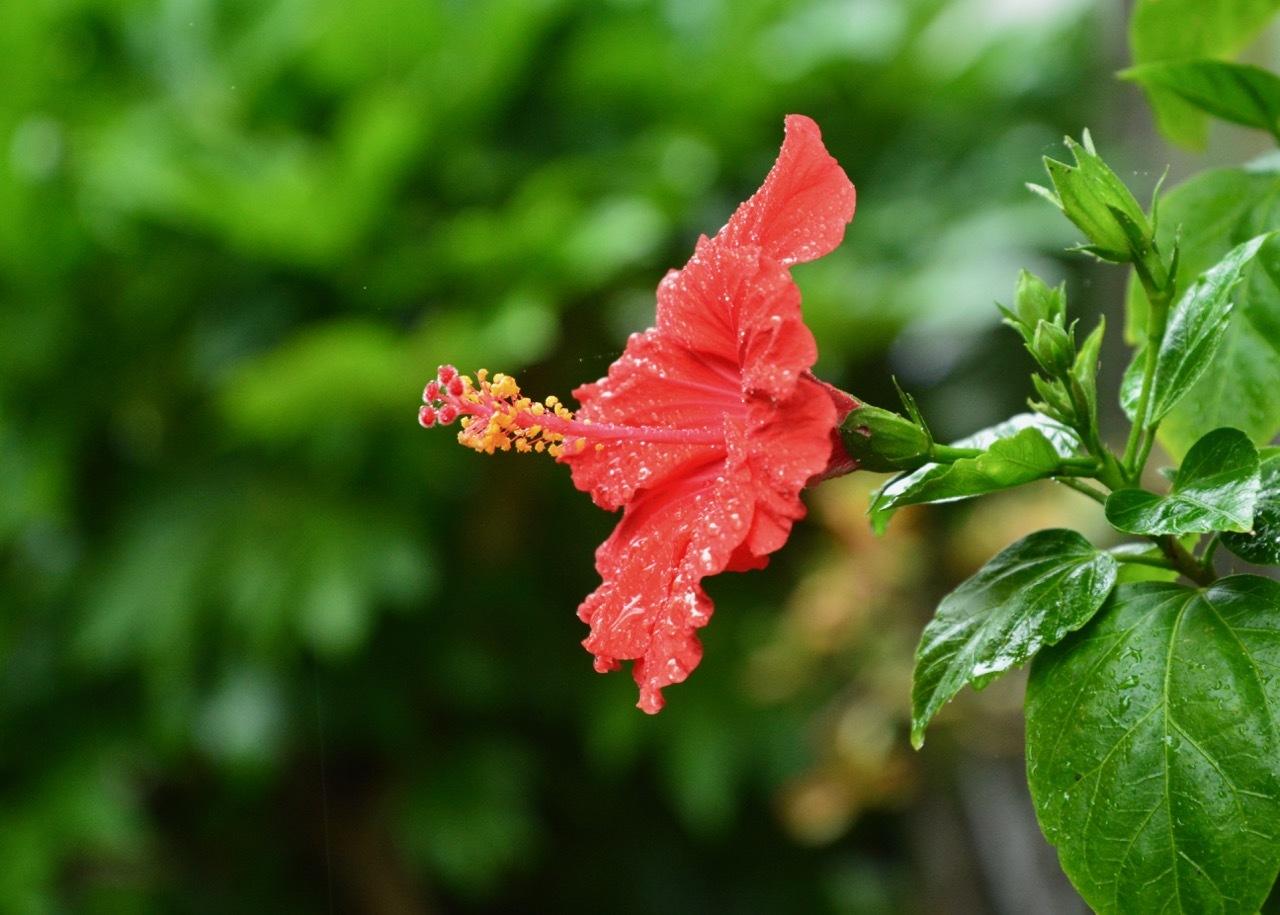 我が家の花たち_e0099737_22001265.jpg