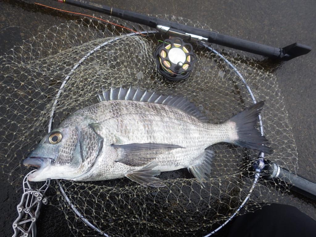 今日も釣り_f0206491_1734178.jpg