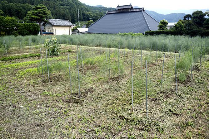 埼玉は感染流行地域(200713)_a0087804_20444051.jpg