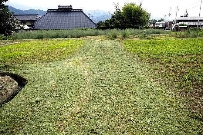 埼玉は感染流行地域(200713)_a0087804_20444154.jpg