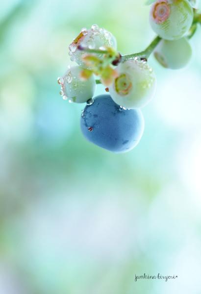 blueberry_e0268051_15080858.jpg